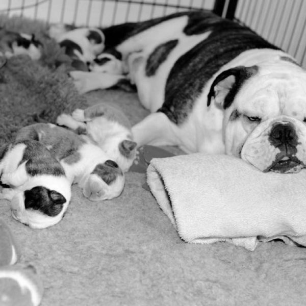 iWoof Puppies