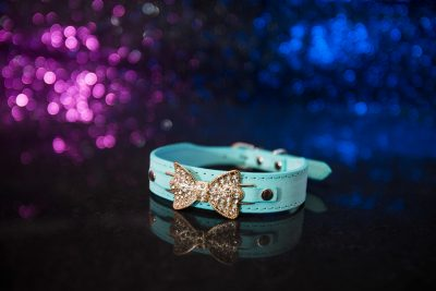 St Ives Dog Collar - Aqua Green