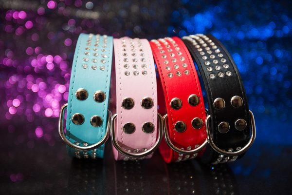 Brighton Leather Dog Collars