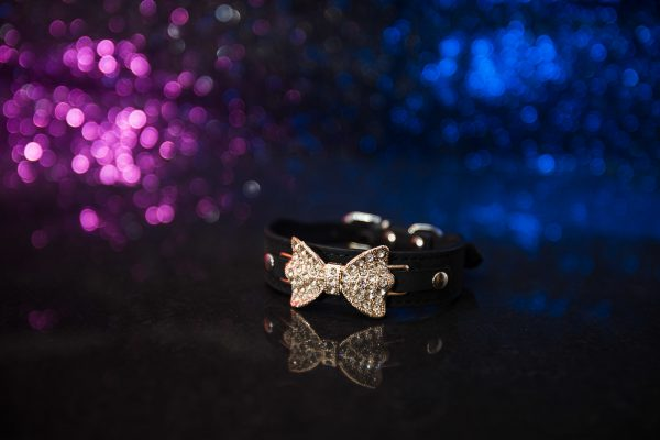 St Ives Dog Collar - Black