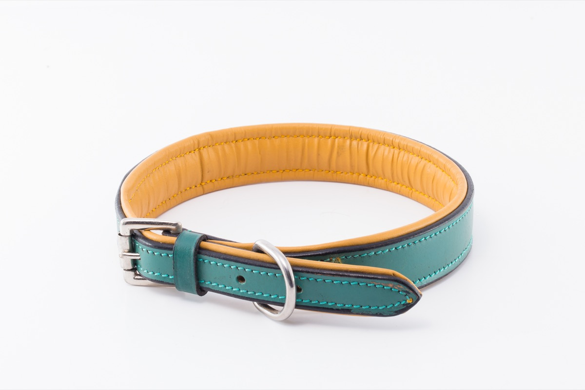 2dae0fa1332 London Designer Dog Collar by IWOOF.com™ in Designer Dog Collars