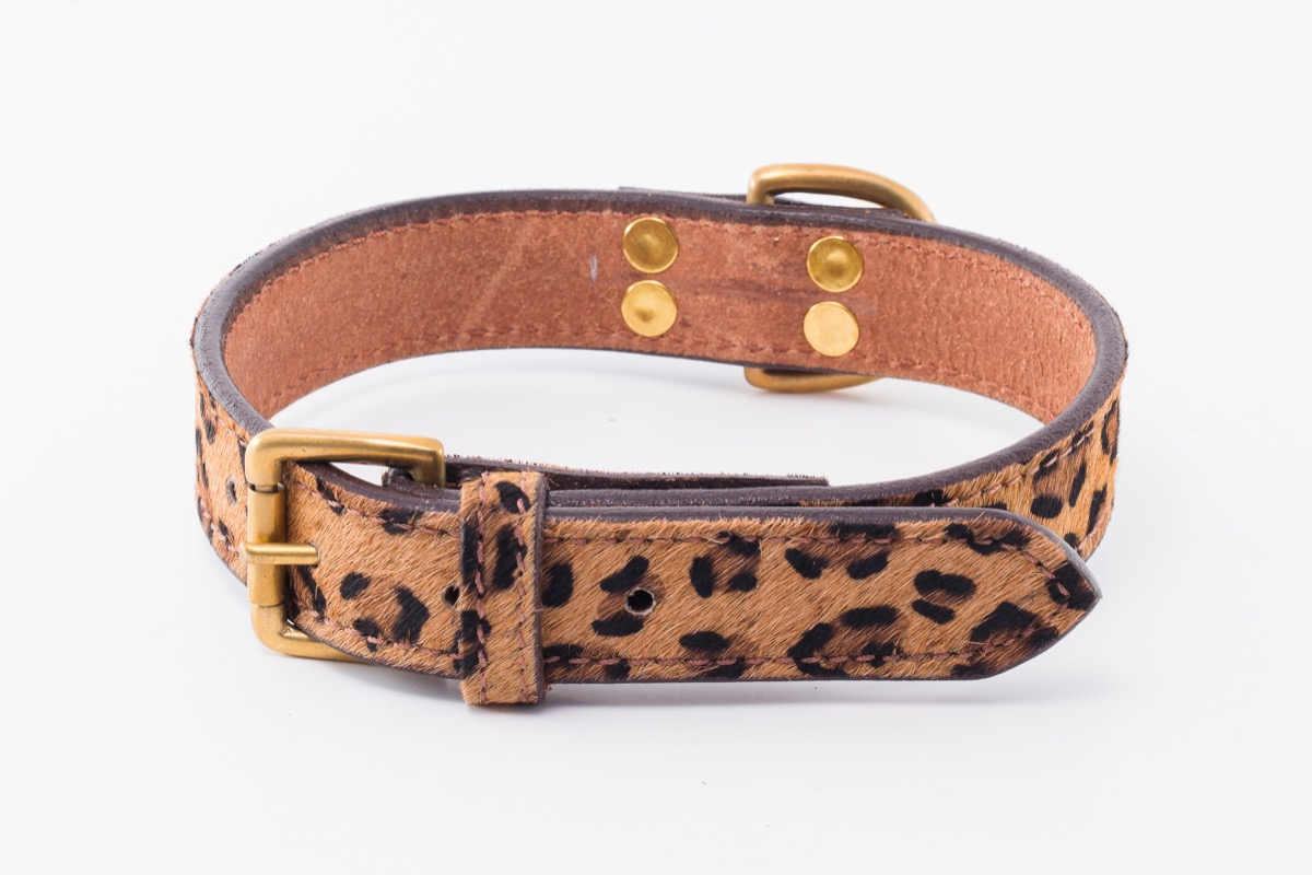 08ad55b32b8 Cheetah Designer Dog Collar by IWOOF.com™ in Designer Dog Collars
