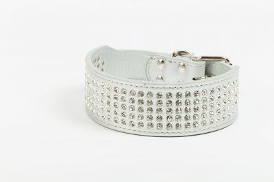 Las Vegas large white designer dog collar by IWOOF
