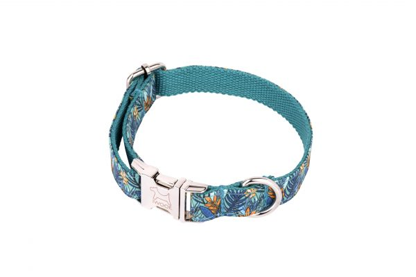Moorland designer dog collar with silver buckle by IWOOF