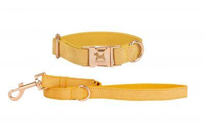 English Daffodil dog collar and lead set