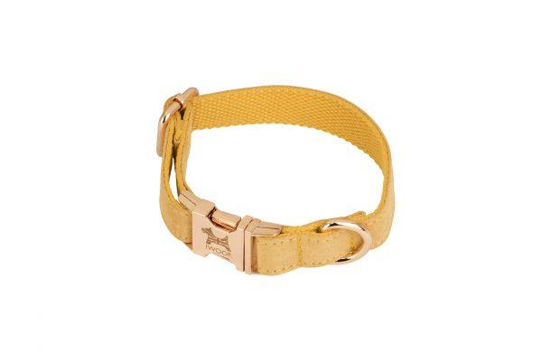 English Daffodil designer dog collar and lead set by IWOOF